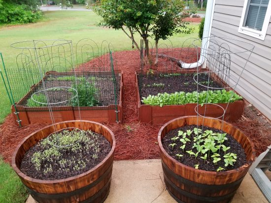 50 With Flair, Raised Bed Gardens, Summer Garden